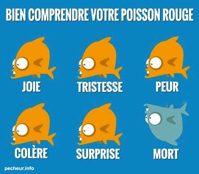 comprendre poisson rouge