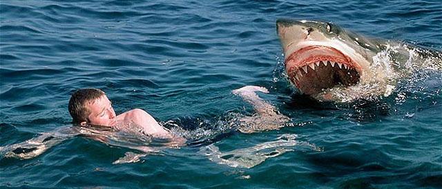 requin attaque cote d'azur