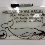 whale fart