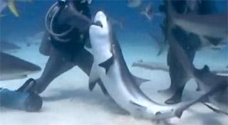 main dans machoire du requin