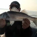 Culture Fish 35