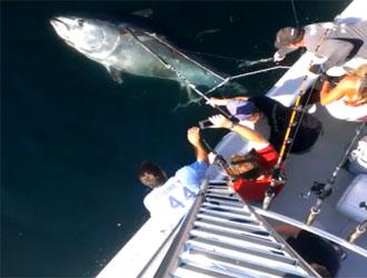 pêche au thon record