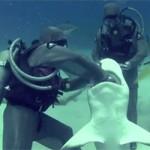 Enlever l'hameçon du requin