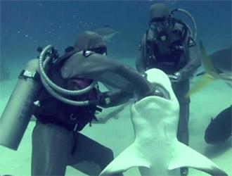 un hameçon dans la mâchoire du requin