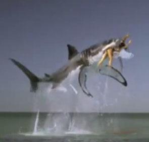 woman eaten by shark