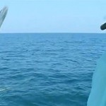 40 lb baracuda jumps into boat