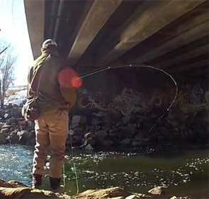 flyfishing for carp in Colorado