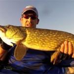 Culture Fish 38
