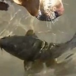 Dog & Fish Kiss and Play Together