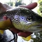 Vidéo de pêche à la mouche dans les Pyrénées