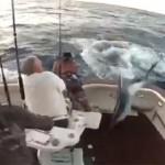 Le marlin saute dans le bateau, le pêcheur tombe à l'eau