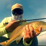 Redfish, snook et tarpon en kayak