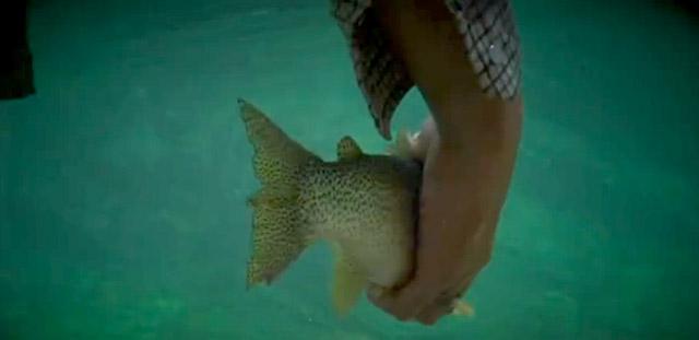trout canada flyfishing
