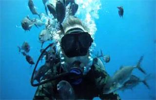 tuna diving