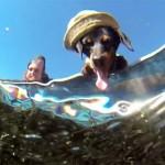 Le chien pêcheur
