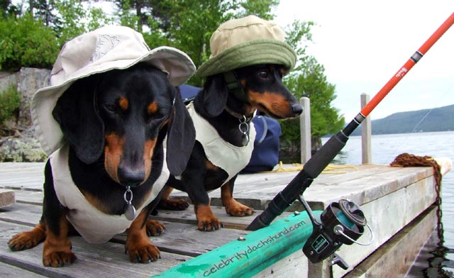 2 dachshunds dressed for fishing