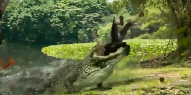 crocodile mange une femme qui a un sac en croco