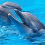 dauphins-sport-decouverte