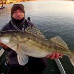 Culture Fish 43