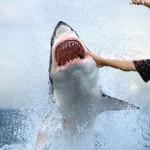Il tue un requin, recoud sa propre jambe, et va au pub !