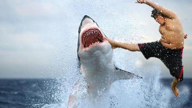 bagarre avec un requin