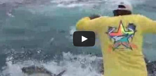 video of a feeding madness in Panama, a lot of yellowfin tuna