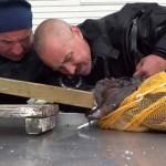 Pêcheur la main coincée dans un poisson