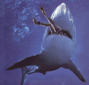 un requin mange un baigneur, les jambes dépassent de sa bouche