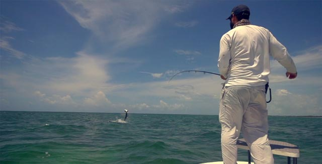a tarpon is jumping when hooked by flyfisherman