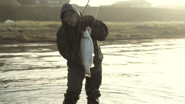 truite de mer pêchée à la mouche au danemark