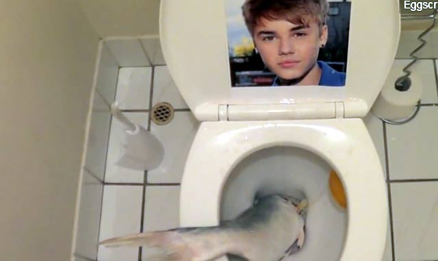 justin bieber avec un poisson dans une cuvette de WC