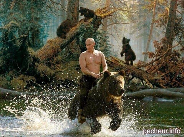 poutine chevauche un ours