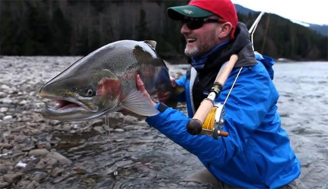grosse truite steelhead sur la rivière Skeena