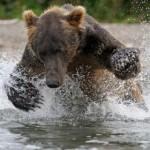 terre-des-ours-film
