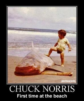 Chuck Norris firts time at the beach catches a shark