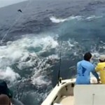 Tuna frenzy in Panama !