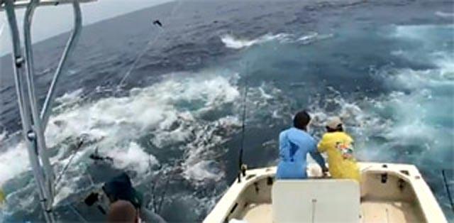 fishing boat for tuna in panama