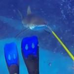 En Plongée, Rencontre avec un Requin
