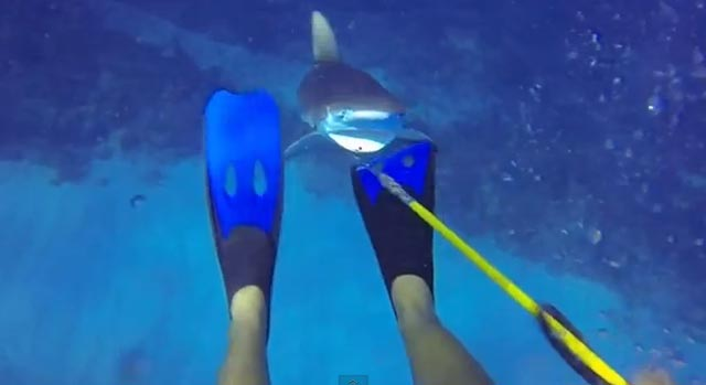 requin attaque plongeur sous-marin video