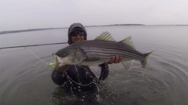 striped bass fly fishing Long Island