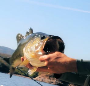 Geobass fishing in Mexico