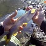 Culture Fish 50