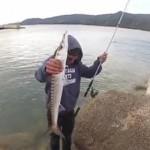 Culture Fish 54