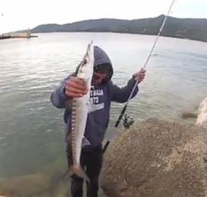barracuda pêché à bonifacio
