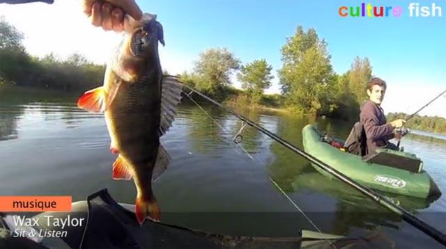 culture fish 56, une belle perche en float-tube