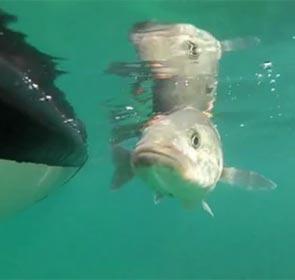 pêcheur en bateau relâche un poisson