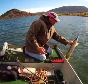 pêcheur en barque  relâche un brochet