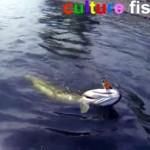 Culture Fish 59