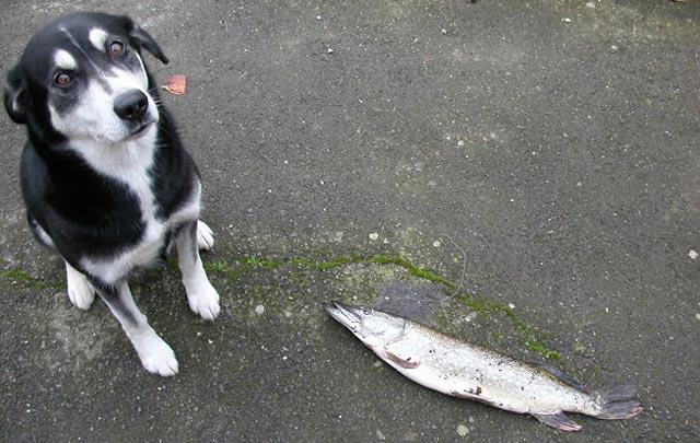 rapporte le poisson mon chien