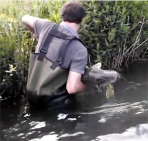 brochet par la queue et sorti de l'eau